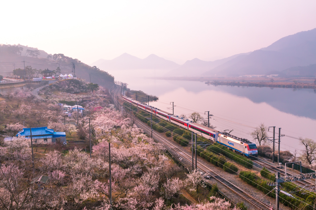 The Blossoms of Yangsan Sunmaewon